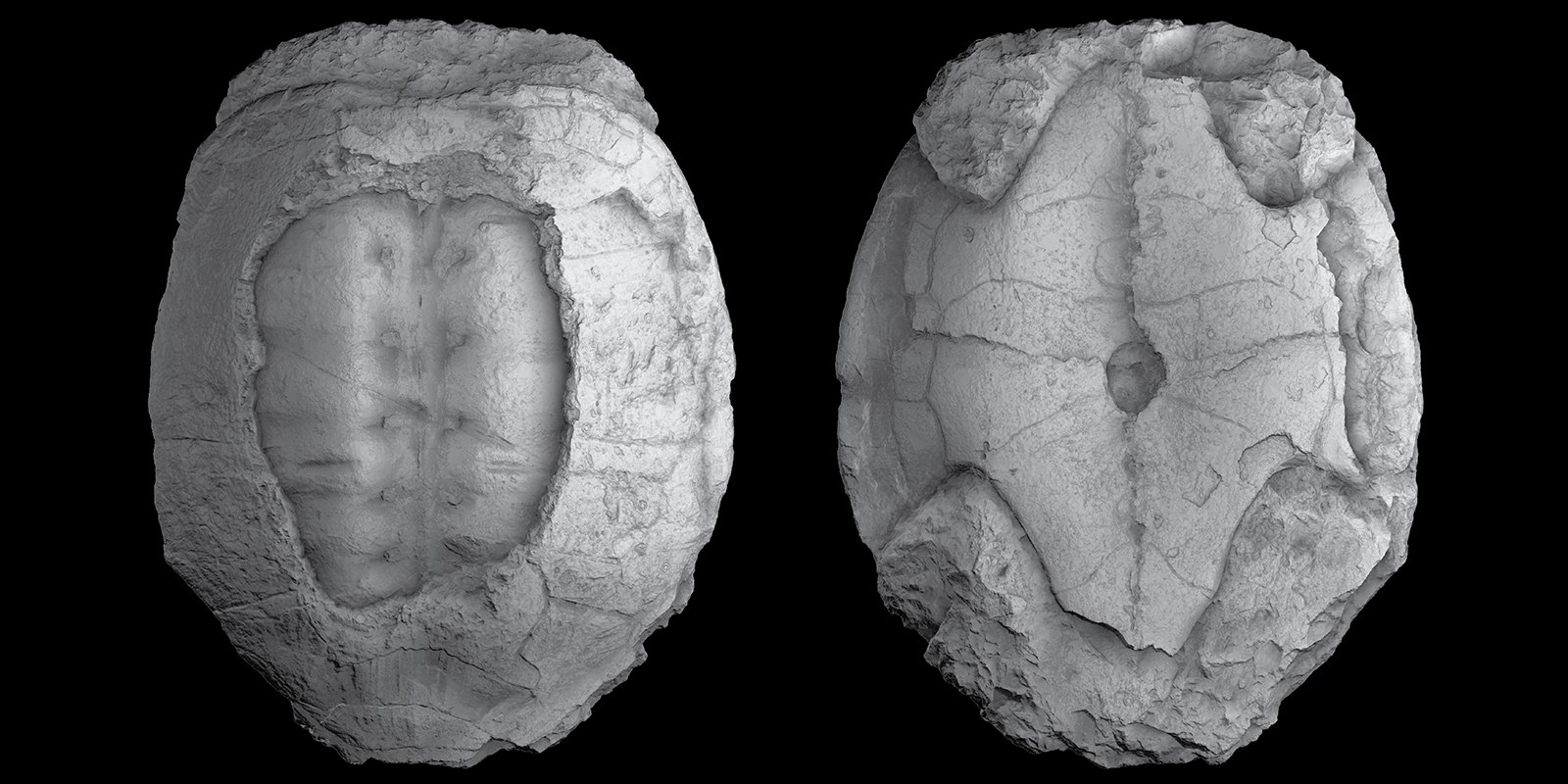The long lost holotype of the Late Jurassic turtle Plesiochelys etalloni