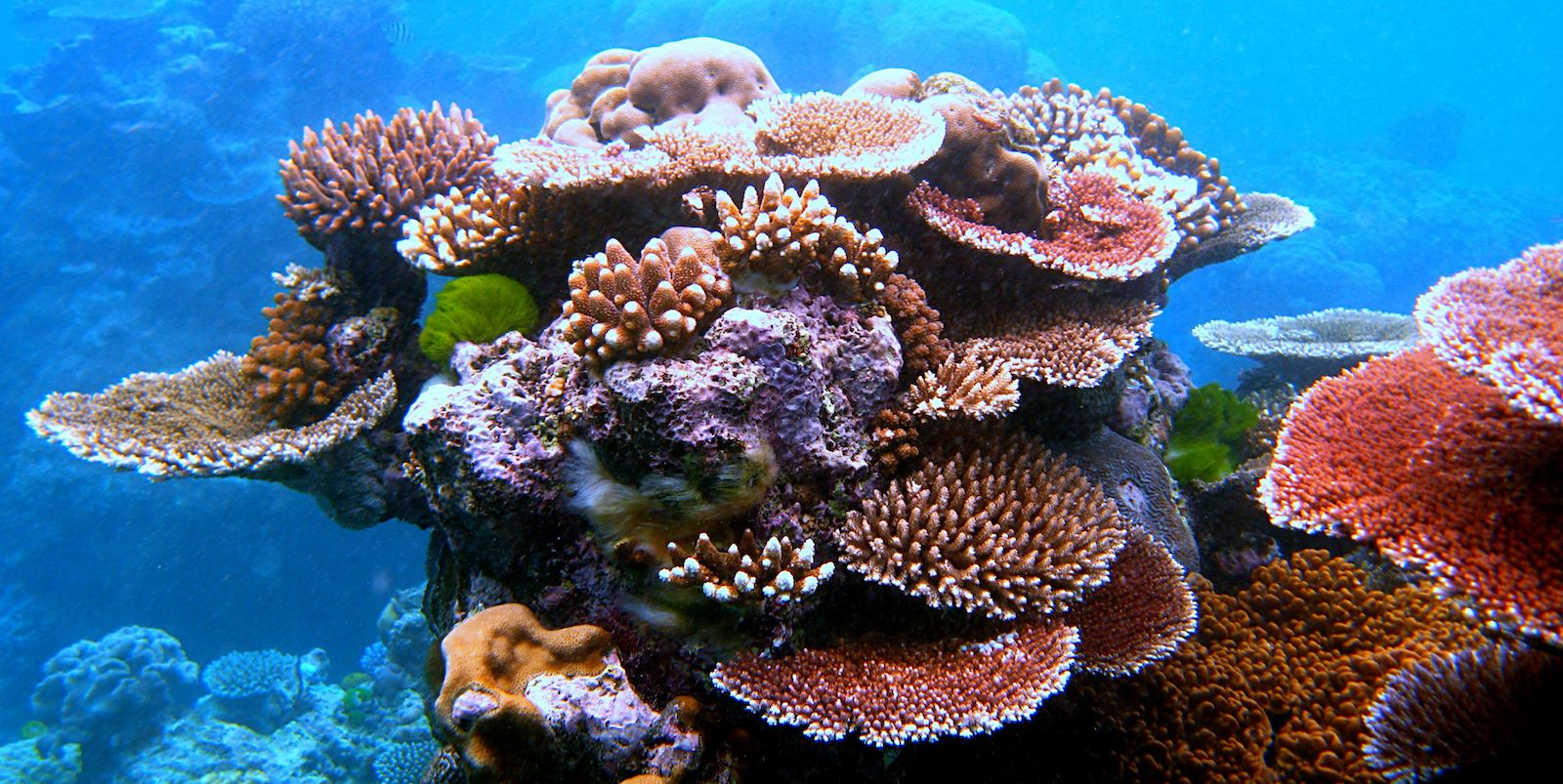 Is coral richness related to community resistance to, and recovery from, disturbance?