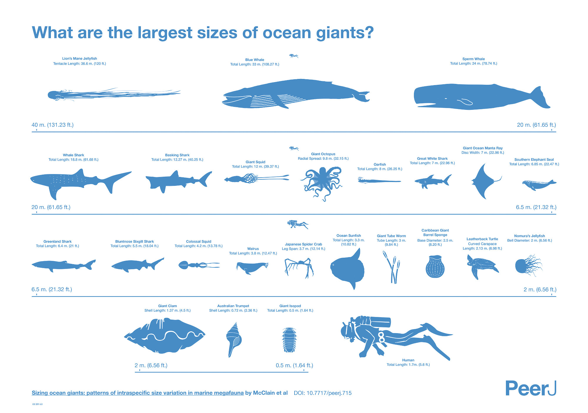 Sizing up the giants that live in the ocean
