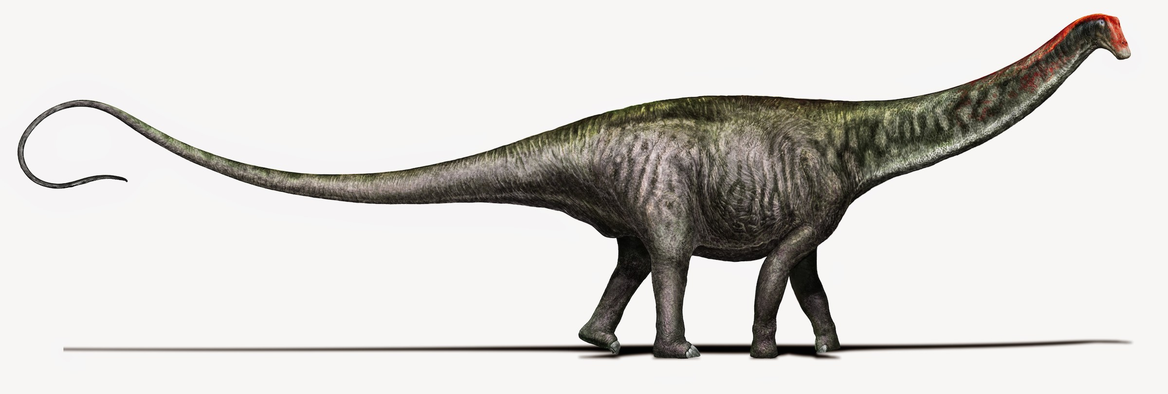 Brontosaurus is back!