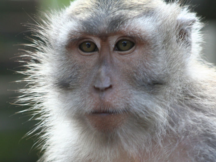 Modelling emotional bookkeeping in macaque primates