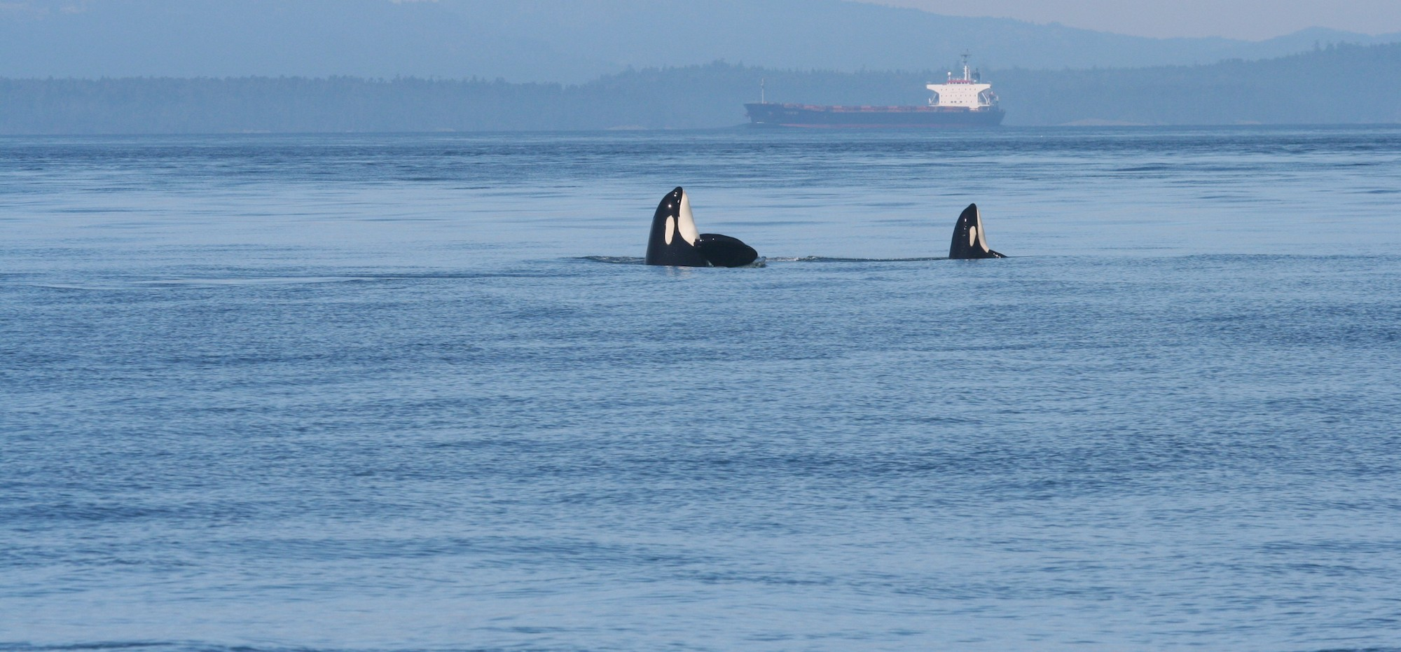 Ship noise extends to frequencies used by endangered killer whales