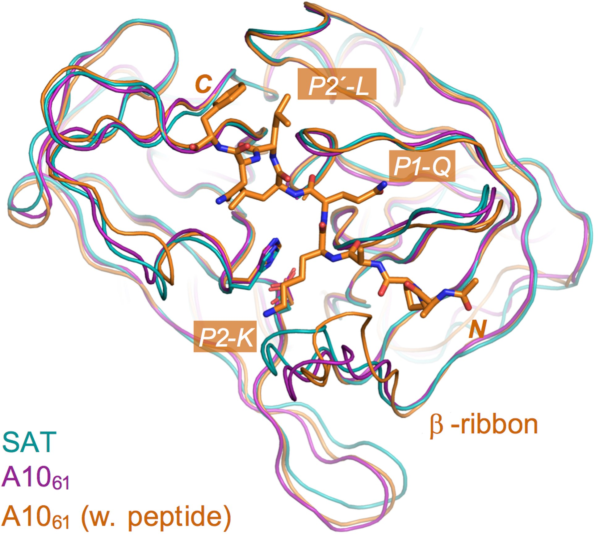 Structure of the 3C protease