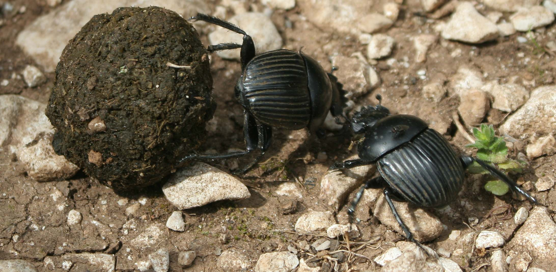 Variegated tropical landscapes conserve diverse dung beetle communities