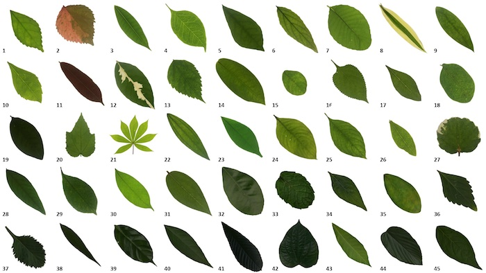 Automated classification of tropical shrub species