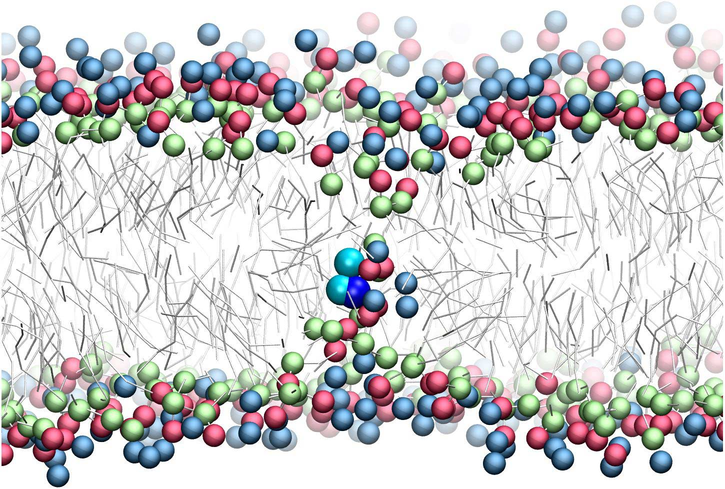 Refining amino acid hydrophobicity for dynamics simulation of membrane proteins