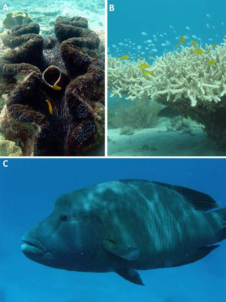 Protecting the Biodiversity of the Great Barrier Reef
