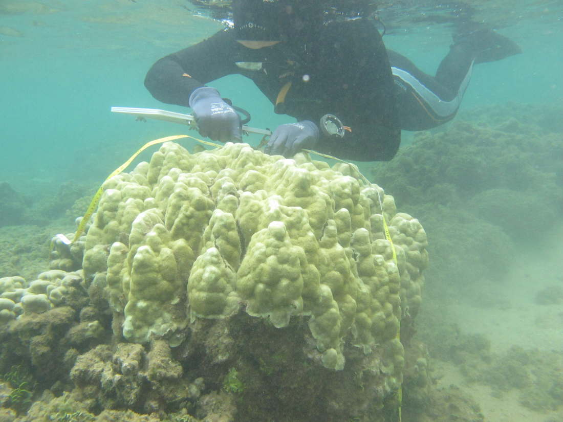 Evidence of acclimatization or adaptation in Hawaiian corals to higher ocean temperatures
