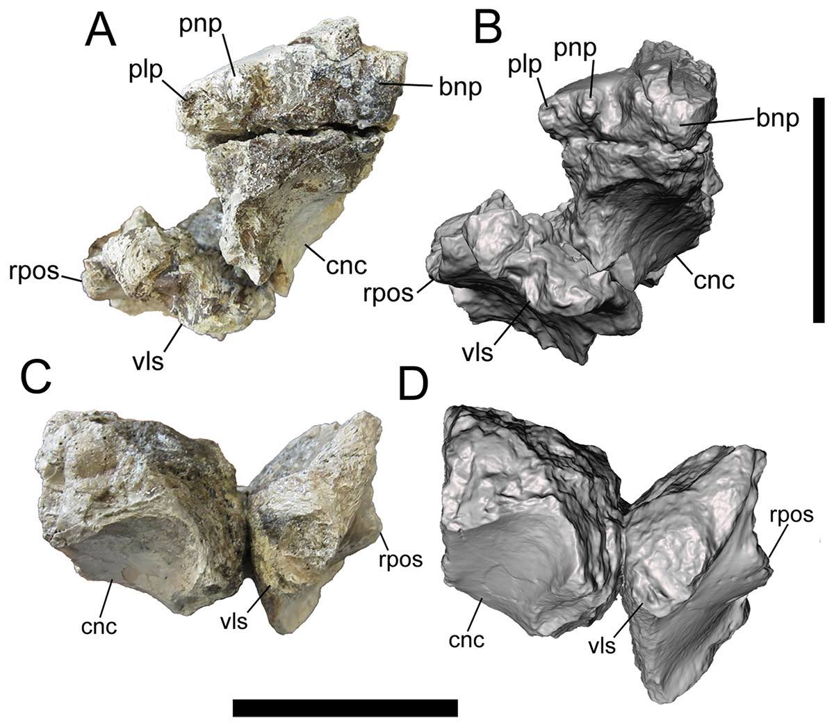A new tyrannosaurid from the Upper Cretaceous Menefee Formation